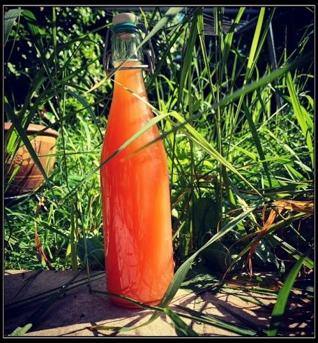 Rabarber sinaasappel anijs en honingsiroop (TM)